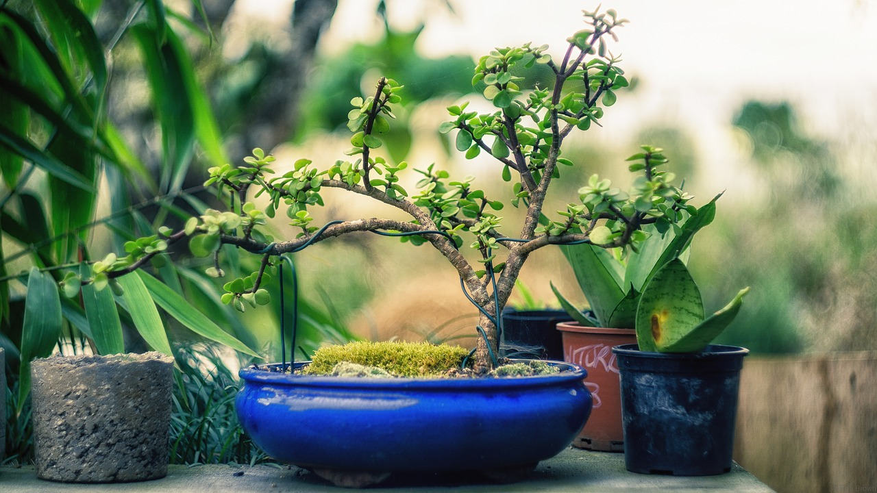 Image showing a miniature house plant
